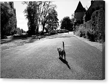 Lonely Cat Canvas Print