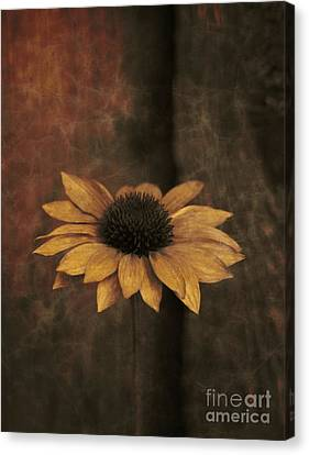 Canvas Print featuring the photograph Lonely Coneflower by Marjorie Imbeau