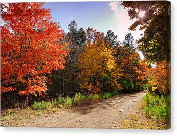 Lonely Forest Road - Talimena Scenic Highway Oklahoma Canvas Print