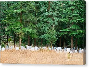 Lonely Graveyard Under Pine Trees Canvas Print by Leyla Ismet