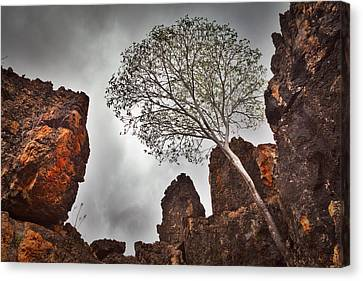 Lonely Gum Tree Canvas Print by Dirk Ercken