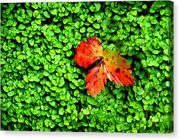 Canvas Print featuring the photograph Lonely Leaf by Charlie and Norma Brock