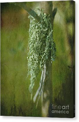 Lonely Lichen Canvas Print by Judi Bagwell