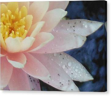 Lonely Lilly Canvas Print by Lori Thompson