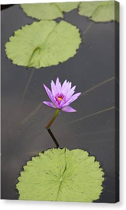 Canvas Print featuring the photograph Lonely Lily by Vadim Levin