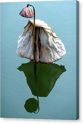 Canvas Print featuring the photograph Lonely Lotus by Julia Ivanovna Willhite