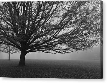 Canvas Print featuring the photograph Lonely Low Tree by Maj Seda