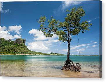 Lonely Mangrove Tree Standing Canvas Print by Michael Runkel