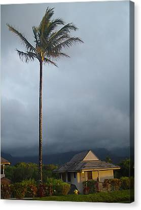 Lonely Palm Canvas Print by John Bushnell