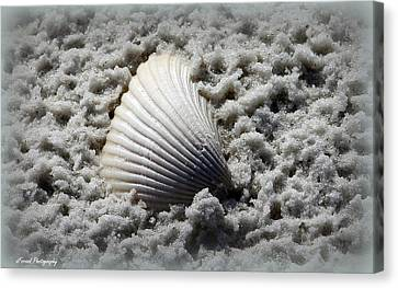 Lonely Shell Canvas Print by Debra Forand