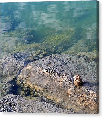 Lonely Shell Canvas Print by Patricia Greer