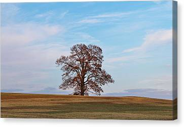 Lonely Tree Canvas Print by Cynthia Guinn