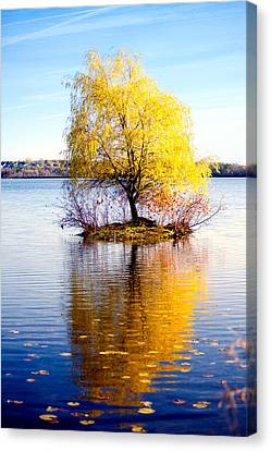 Lonely Tree In Fall Canvas Print by Alexey Stiop