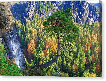 Lonely Tree In The Elbe Sandstone Mountains Canvas Print