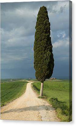 Lonely Tree In Tuscan Landscape  Canvas Print by Jaroslav Frank