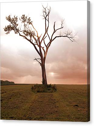 Canvas Print featuring the photograph Lonely Tree by Ricky L Jones