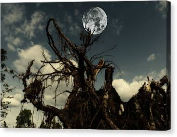 Lonely Tree Roots Reaching For A Full Moon Canvas Print