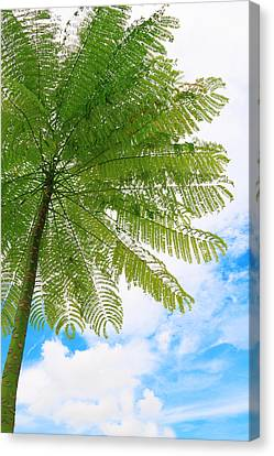 Lonely Tree With Cloudy Sky Canvas Print by Calvin Chan