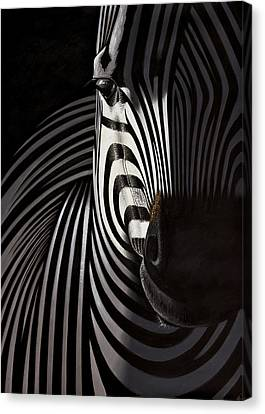 Lonely   Zebra Canvas Print by Raphael  Sanzio