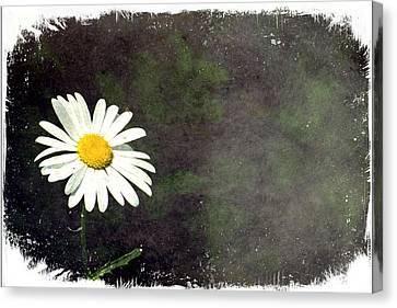 Lonesome Daisy Canvas Print