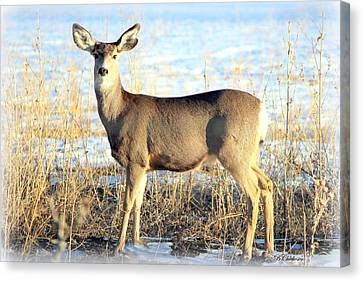 Canvas Print featuring the photograph Lonesome Doe Sunset by Barbara Chichester