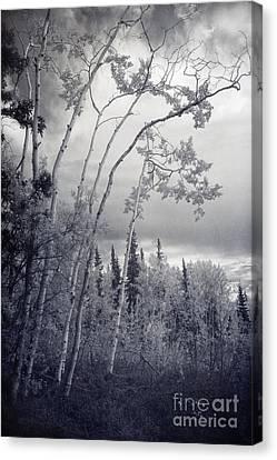 Lonesome Woods Canvas Print by Priska Wettstein