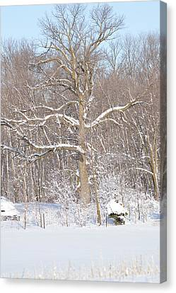 Canvas Print featuring the photograph Loney Ash by Dacia Doroff