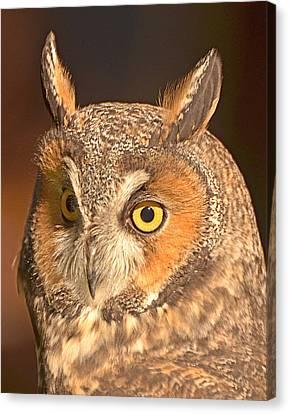 Long-eared Owl Canvas Print by Nancy Landry