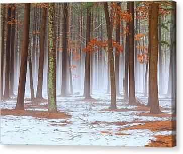 Long Island Pine-oak Forest Canvas Print