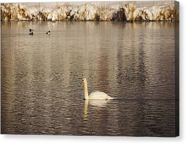 Long-necked Canvas Print by Gloria Pasko