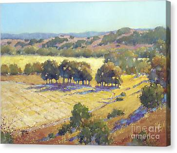 Long Shadows At Los Olivos Canvas Print