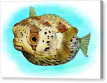 Long-spine Porcupine Fish Canvas Print by Roger Hall