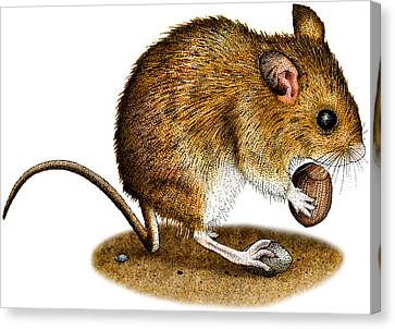 Long-tailed Field Mouse Canvas Print