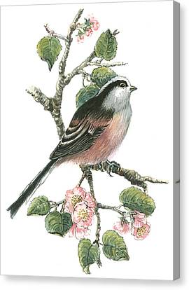 Long Tailed Tit And Cherry Blossom Canvas Print by Nell Hill
