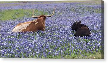 Longhorn And Friend Canvas Print
