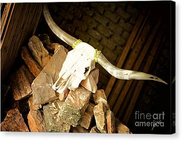 Canvas Print featuring the photograph Longhorn by Erika Weber