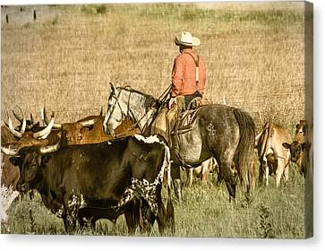 Canvas Print featuring the photograph Longhorn Round Up by Steven Bateson