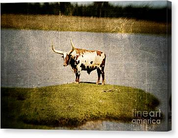 Longhorn Canvas Print by Scott Pellegrin