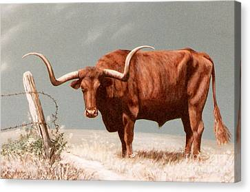 Canvas Print featuring the painting Longhorn Steer by DiDi Higginbotham