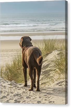 Longing Canvas Print by Jean Noren