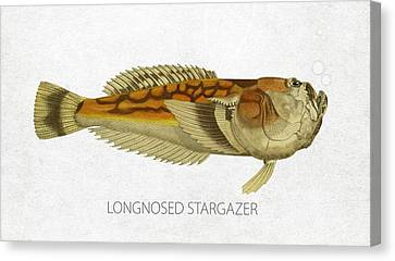 Longnosed Stargazer Canvas Print