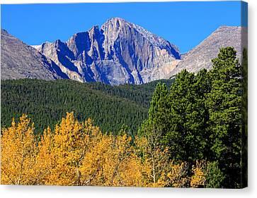 Longs Peak Autumn Aspen Landscape View Canvas Print