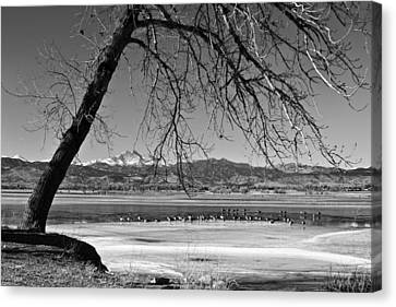 Longs Peak Geese Bw Canvas Print by James BO  Insogna