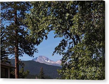 Longs Peak Through The Trees Canvas Print by Kay Pickens