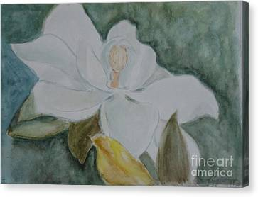 Longue Vue Magnolia 3 Canvas Print by Katie Spicuzza