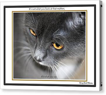 Look And See Canvas Print