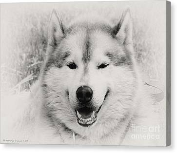 Look At That Face Canvas Print by Gena Weiser