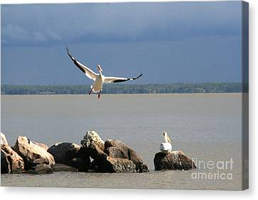 Look Ma - I Can Fly Canvas Print