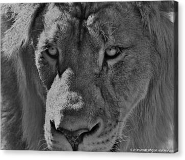 Canvas Print featuring the photograph Look Of Concern by Elaine Malott