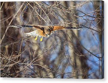 Look Out Below Canvas Print